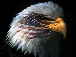 American_Flag_And_Bald_Eagle