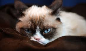 ArtBellishGrumpyCatLook
