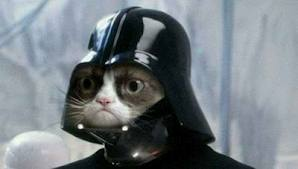 DarthGumpyCat