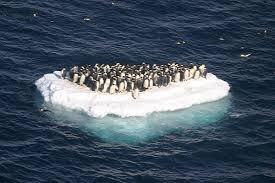 GlobalWarmingRisingOceans-Penguins
