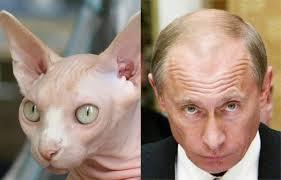 PutinHairlessCat