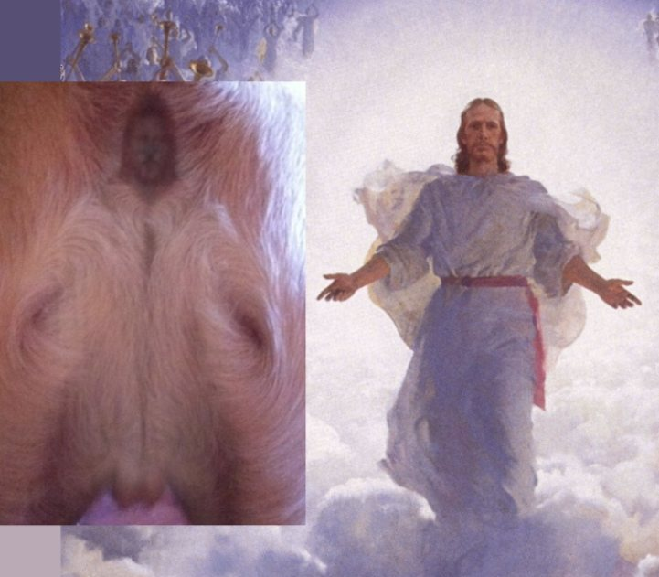 Jesus-And-Dog-Butt-Jesus-Comparison