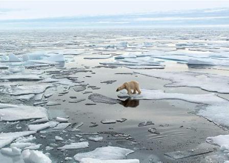 PolarBearPolarIcemelting