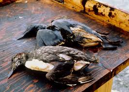 "Albertan Loons taken out by the ""human"" loonies of bitumen brained Canadian fossil fuelers."