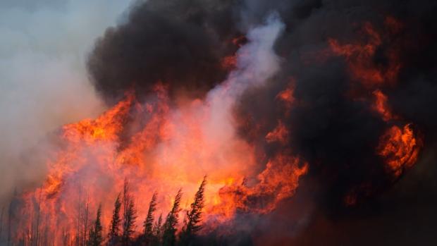 alberta-fires-BorealPines