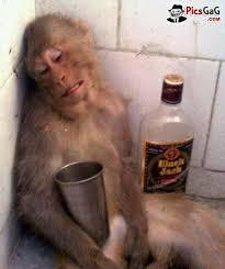 MonkeyDrunkInCorner