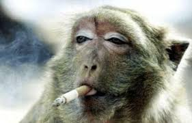MonkeySuckingonCigarette
