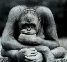 monkeyfaceinfistpondering