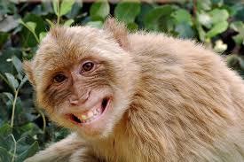 blondsmilingmonkey
