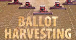 ballot-harvesting-620